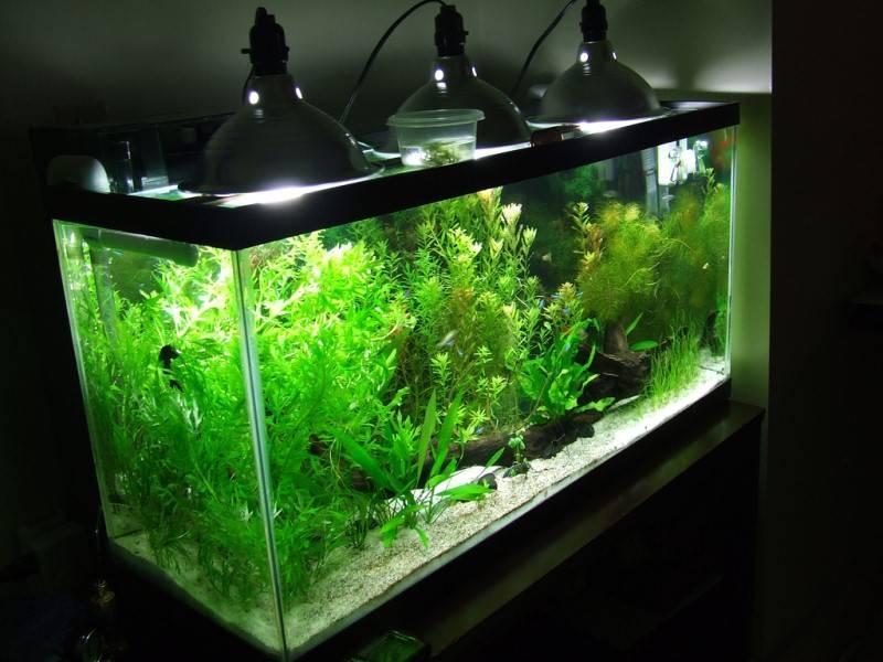 Лампы для аквариума и все ,что нужно о них знать. | аквариумные рыбки