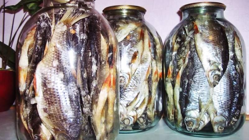 Засолка и сушка плотвы — советуют рыбаки