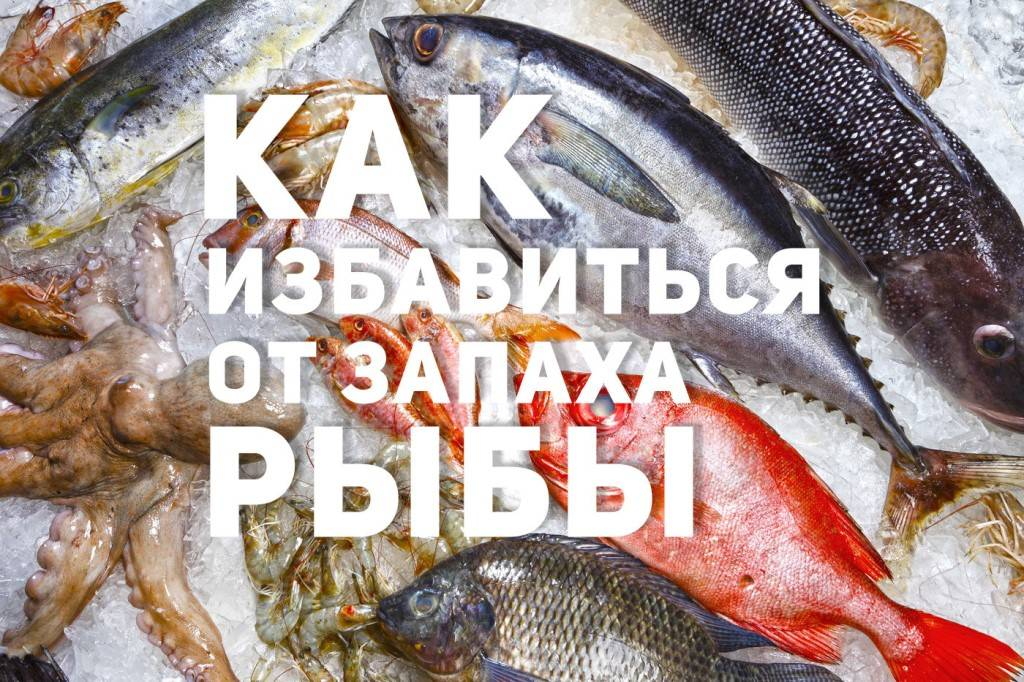 Как быстро и без затрат избавиться от неприятного запаха рыбы в квартире