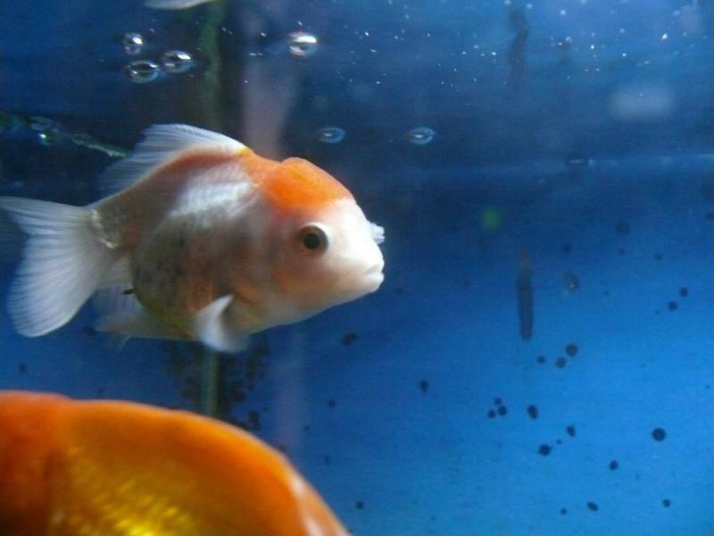 Почему умирают рыбки в аквариуме дома, погибают одна за другой: от чего дохнут, в чем причина и что делать?