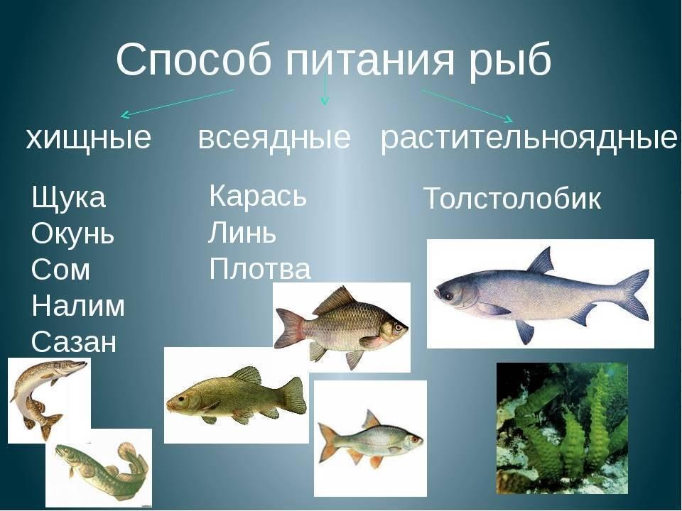 Рыбы. признаки рыб. видеоурок. окружающий мир 1 класс