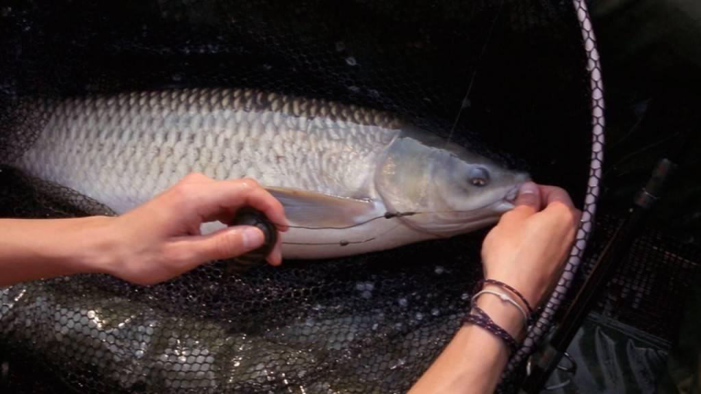 Уловистые насадки, наживки и прикормка для рыбалки, проверенные бывалыми рыбаками