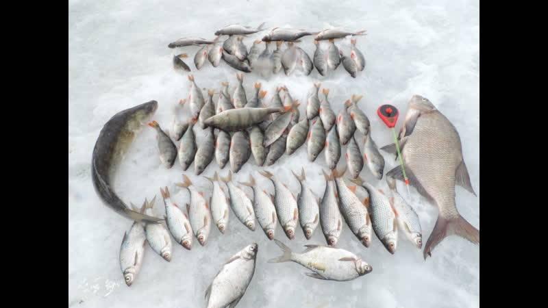 Рыбалка в пудышах на яузском водохранилище