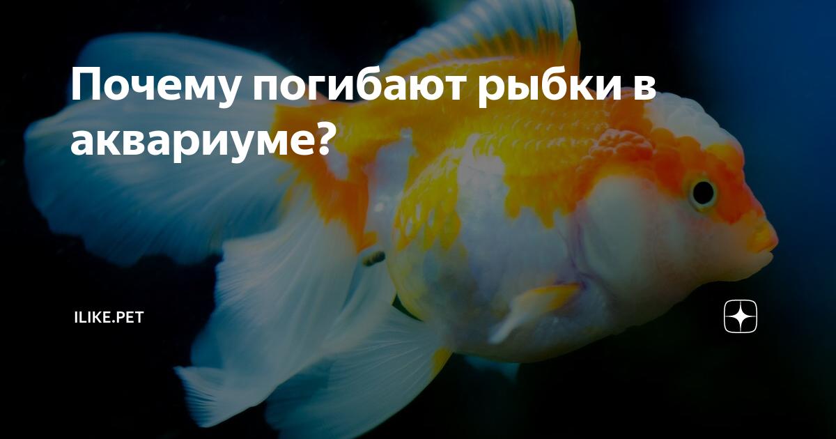 Почему умирают рыбки в аквариуме и что делать: перекормление, кислород, азот, температура воды, агрессивные соседи, период нереста, заболевания