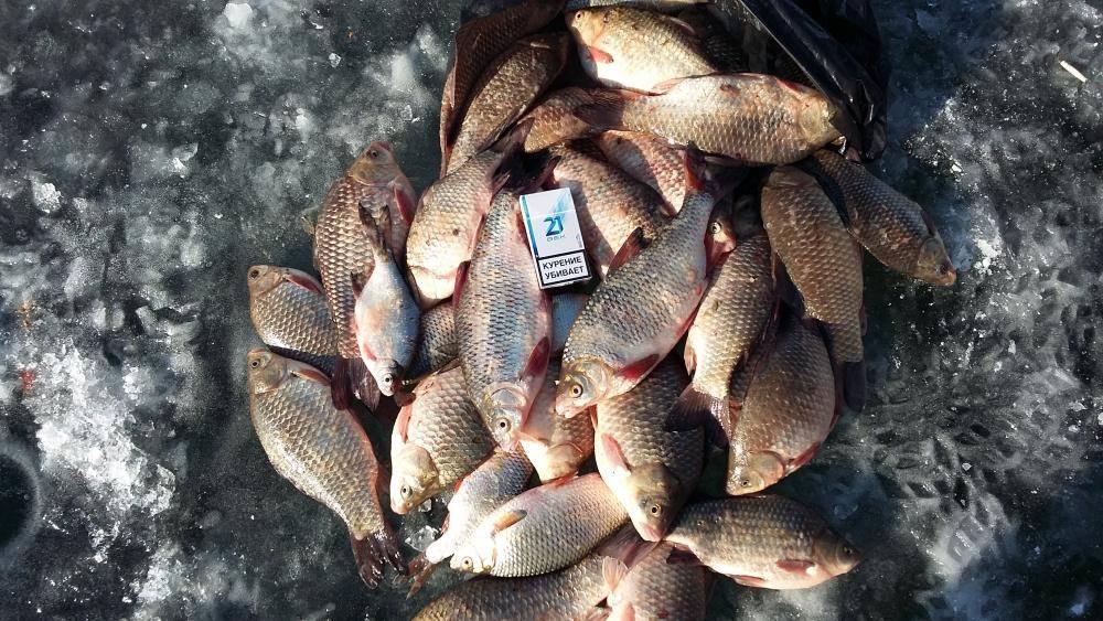 Прогноз клева рыбы на неделю, на семь дней » мир улова