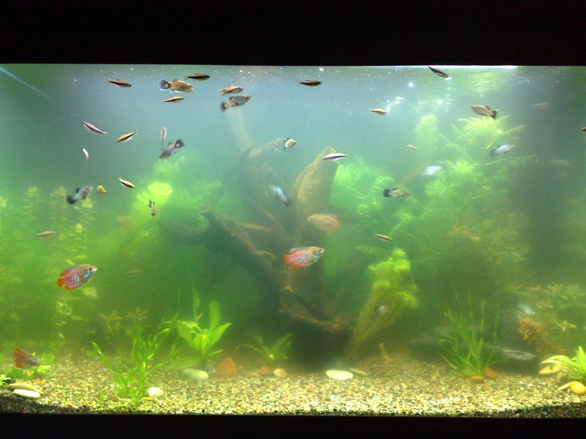 11 причин, почему мутнеет вода в аквариуме