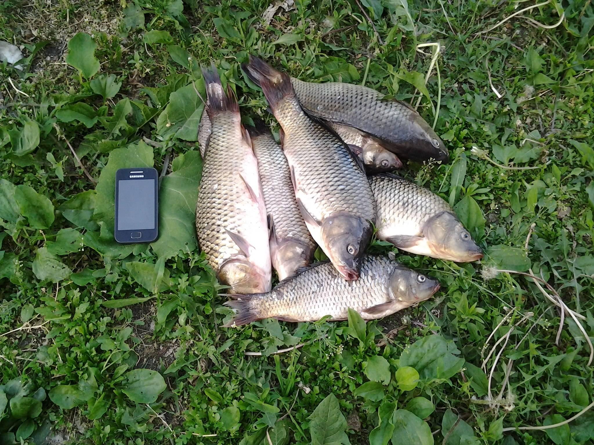 Рыбалка в кирове и кировской области