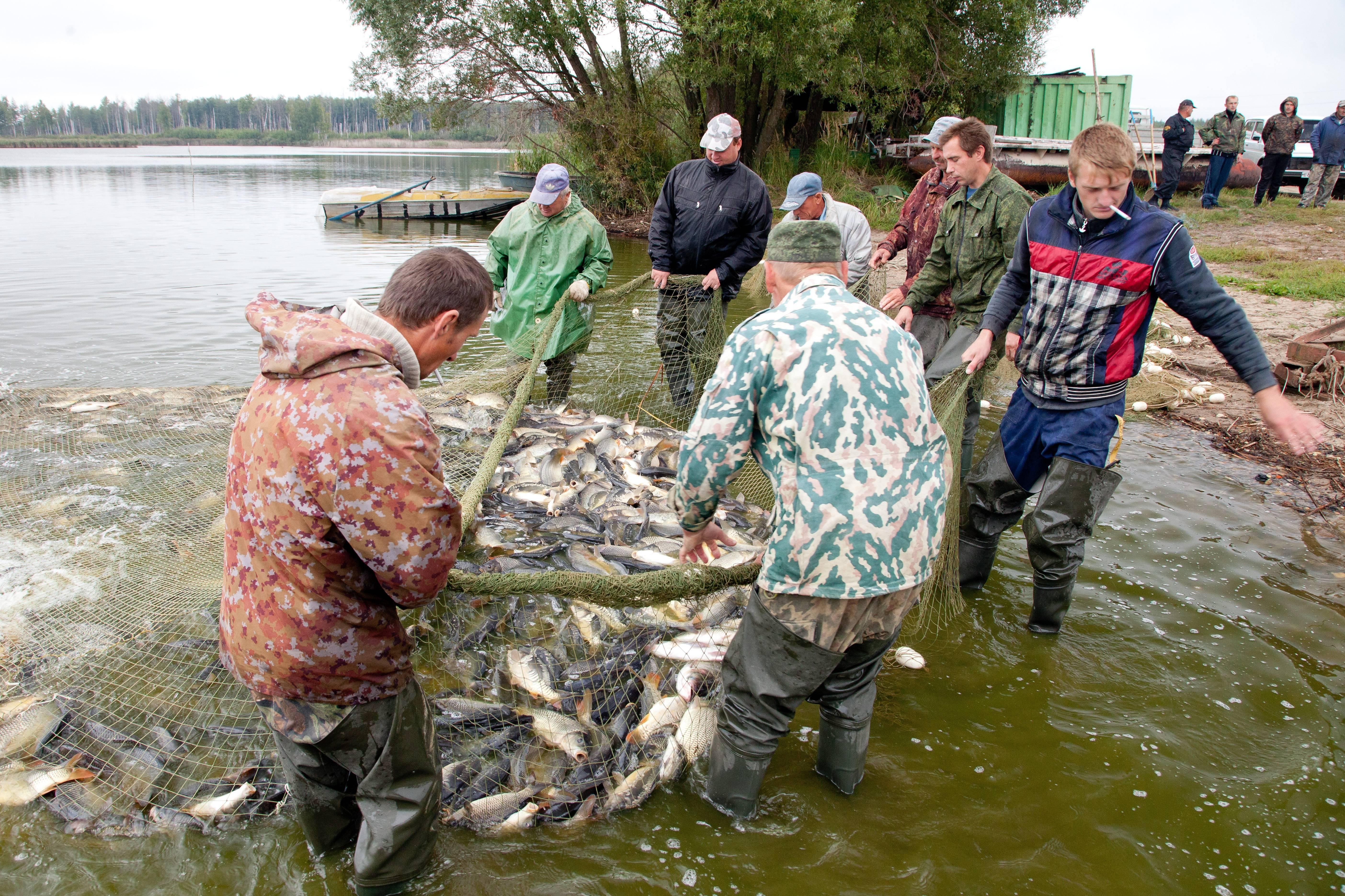 Березняки - платная рыбалка в подмосковье недорого. рыбалка в подмосковье с проживанием.