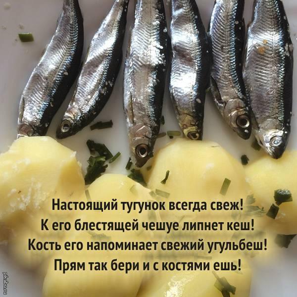 Тугун: описание, состав, тугун в кулинарии