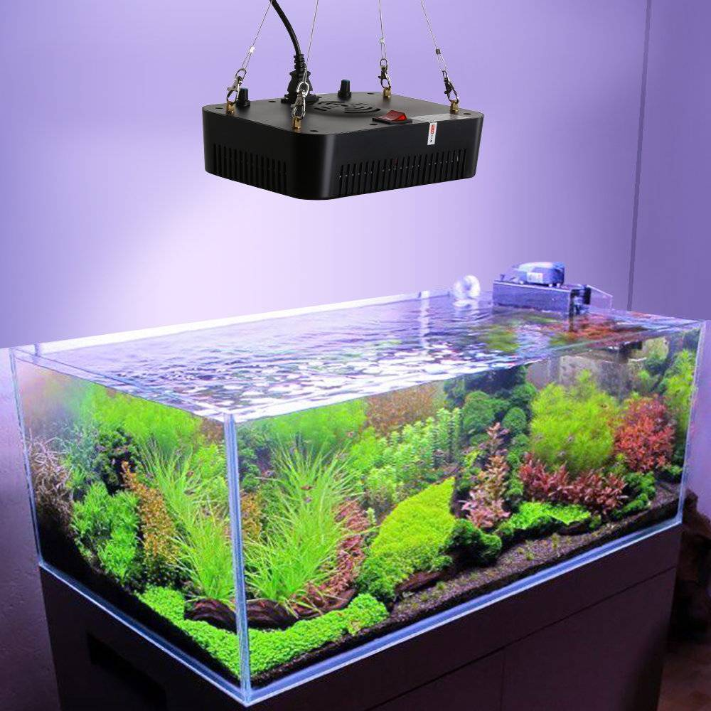 Освещение для аквариума с растениями и рыбками, сколько должен гореть свет, какой лучше
