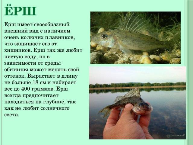 Рыба лещ: подробная характеристика, ловля и разведение