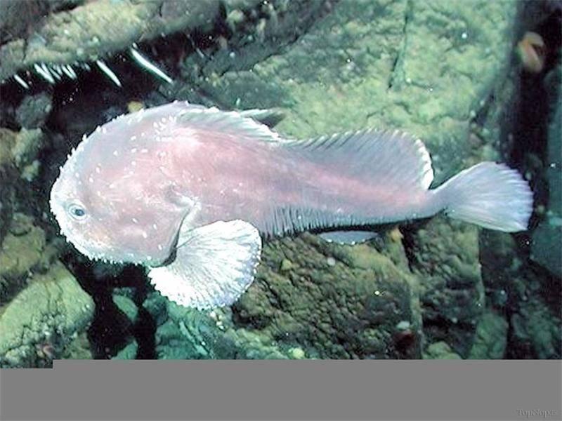 Рыба-капля: фото, содержание, разведение, совместимость, видео рыба-капля: фото, содержание, разведение, совместимость, видео