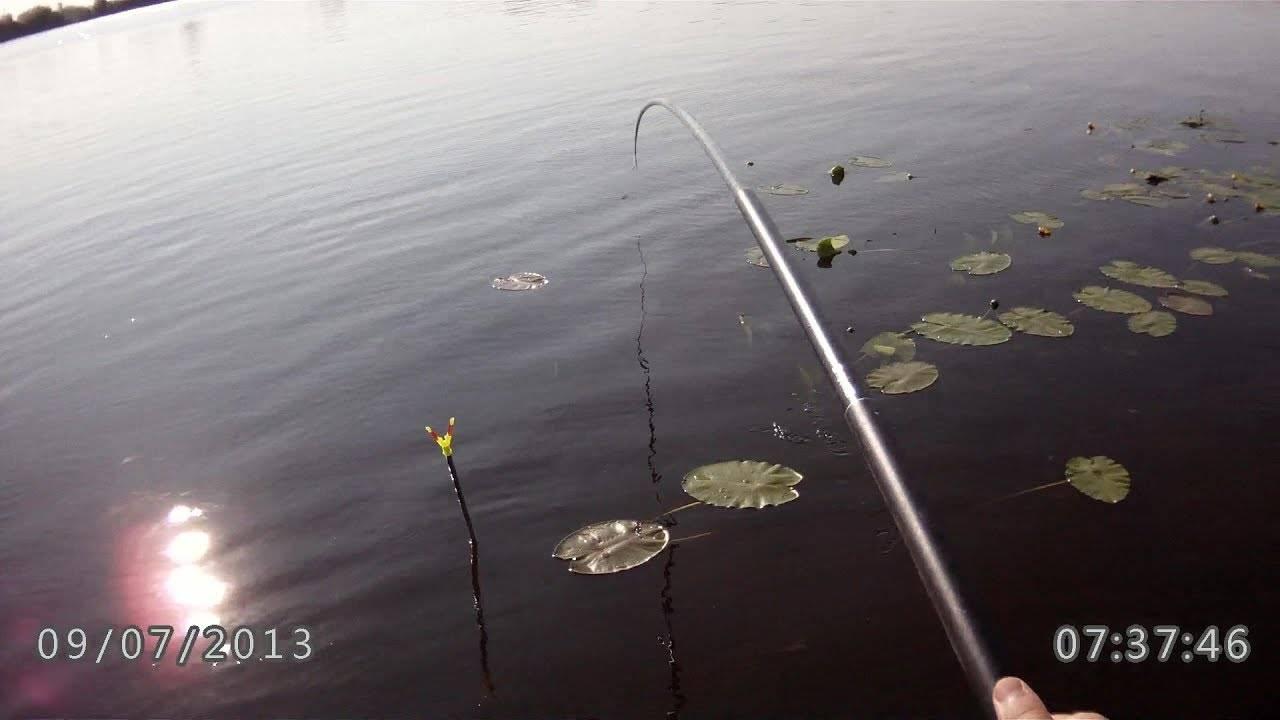 Ловля щуки в ноябре: где искать, как и на что ловить. ноябрь: рыбалка на спиннинг, ловится ли щука в конце ноября