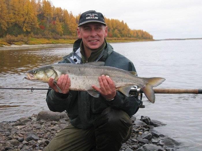Нельма где чем ловить, места рыбалки   клуб кузьмич - сайт о рыбалке