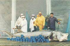 Обзор самой дорогой красной рыбы