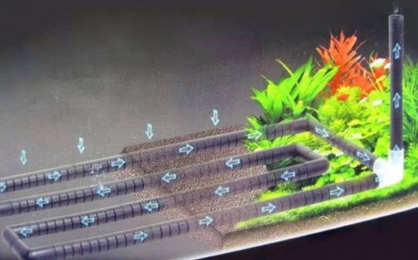 Донный фильтр для аквариума: принцип работы, как сделать самостоятельно, как установить, а также преимущества и недостатки устройства