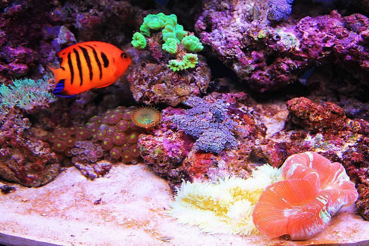 Запускаем морской аквариум у себя дома