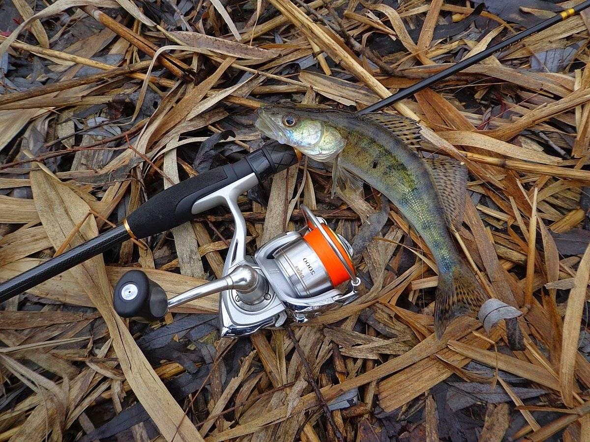 Рыбалка на щуку весной на спиннинг: сезон ловли, а также когда и где можно ловить