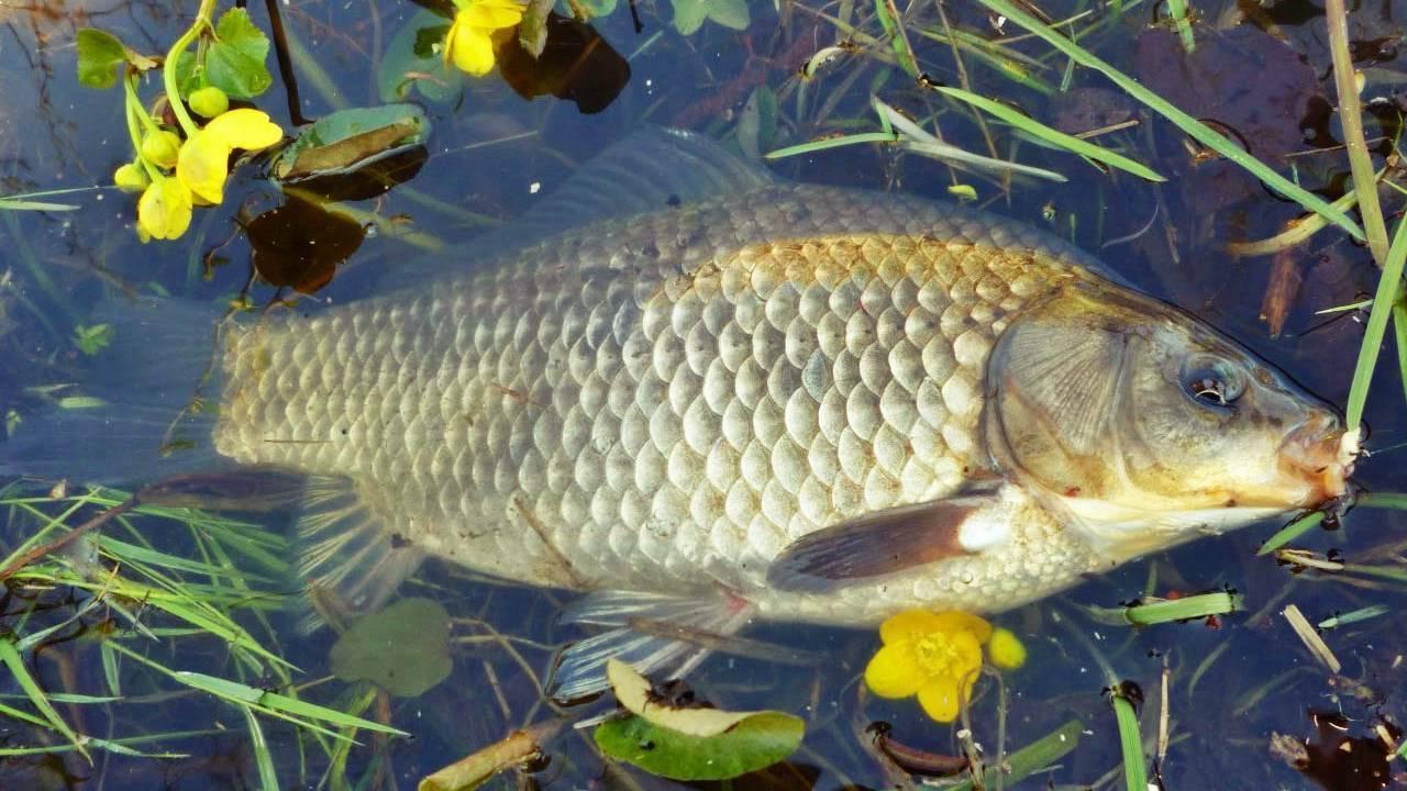 Рыбалка в коломне: где клюет рыба? рыбалка на оке, в осинках и в других местах. где ловить раков и карасей?