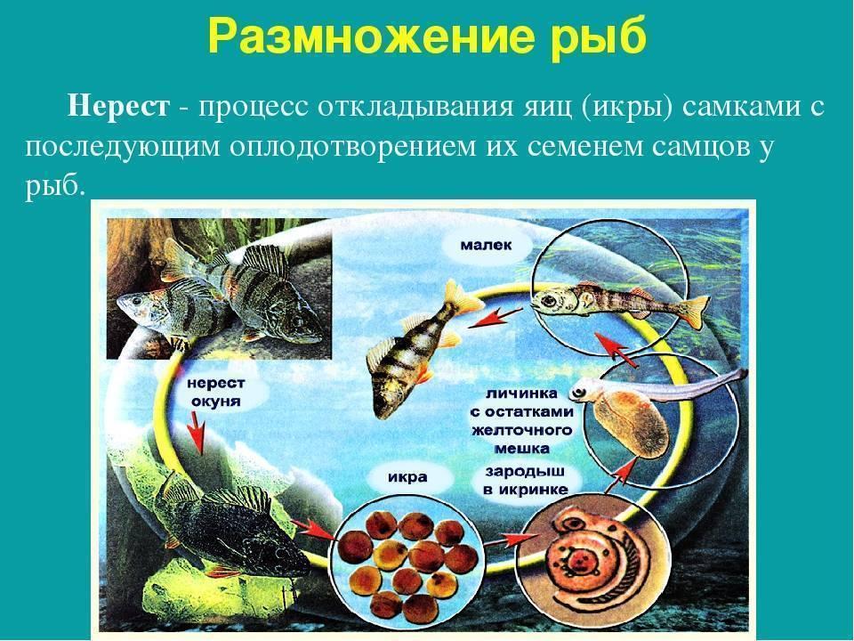 Ловля леща летом: как ловить, на что клюет рыба, необходимые оснастки