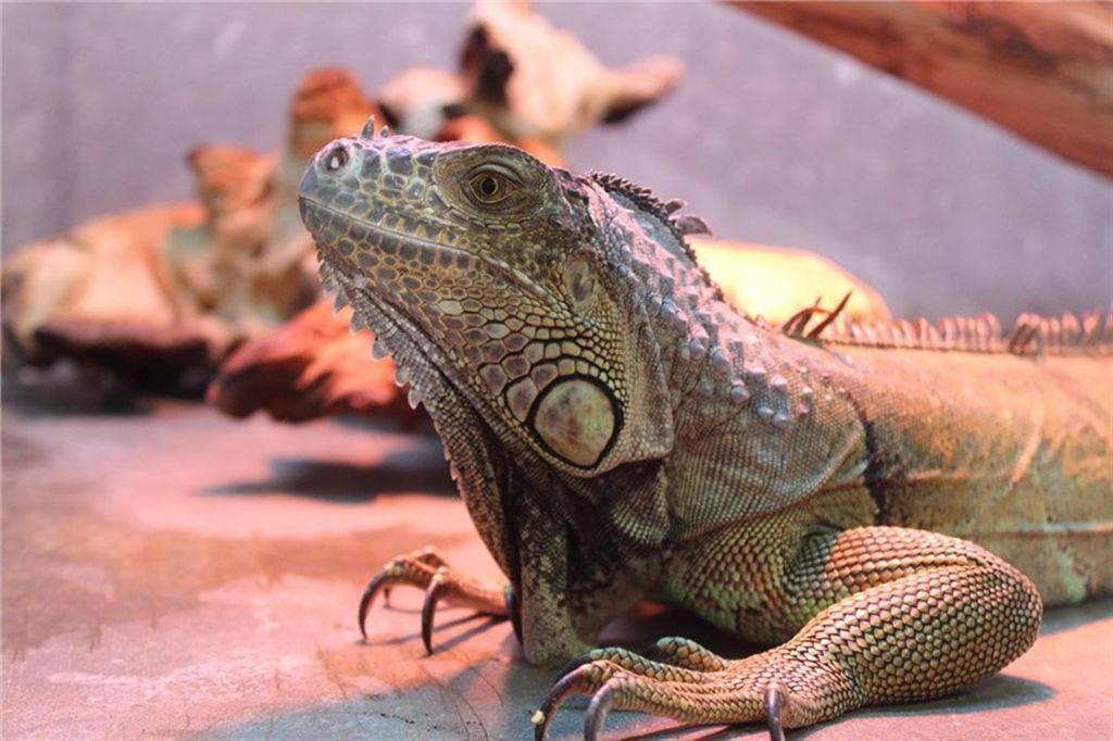 Как поймать ящерицу и содержать ее в неволе: 14 шагов