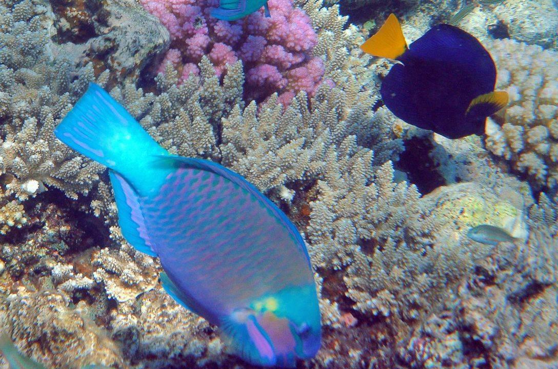 Все об опасных рыбах красного моря