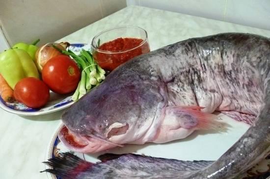 Польза сома, его печени и икры: особенности приготовления рыбного продукта - red fox day
