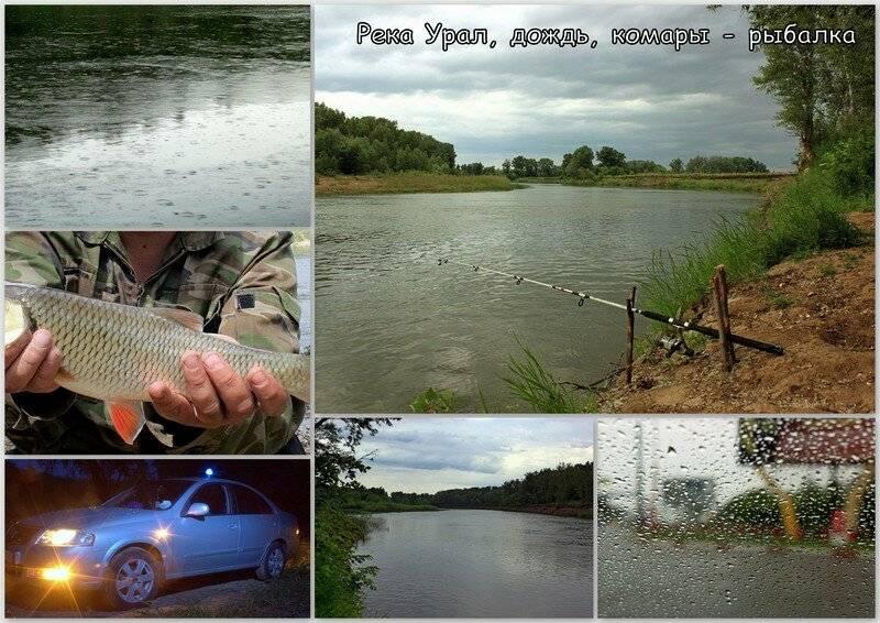 Рыбалка, звезды, комары. загадки важной для казахстана и астрахани реки | kaspyinfo.ru