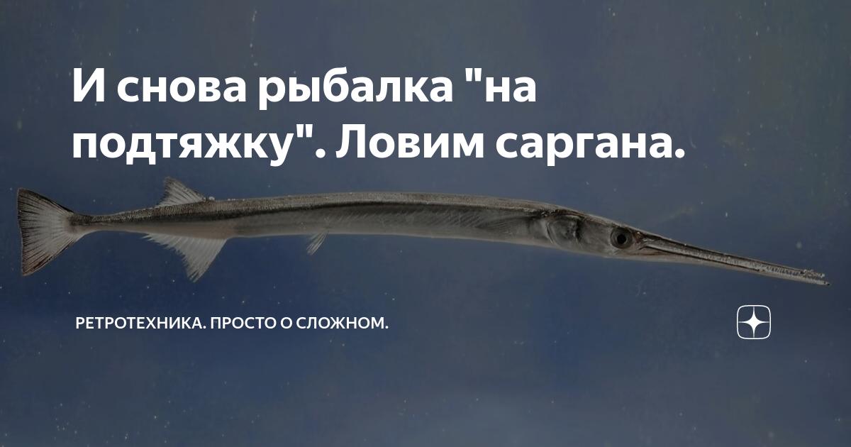 Рыба-игла: фото, рецепты приготовления, полезные свойства, где водится (длиннорылая, черноморская)
