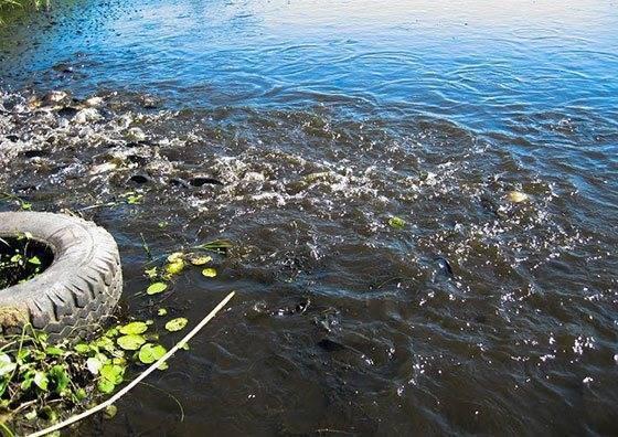 Рыбы без чешуи: названия, причины отсутствия чешуи