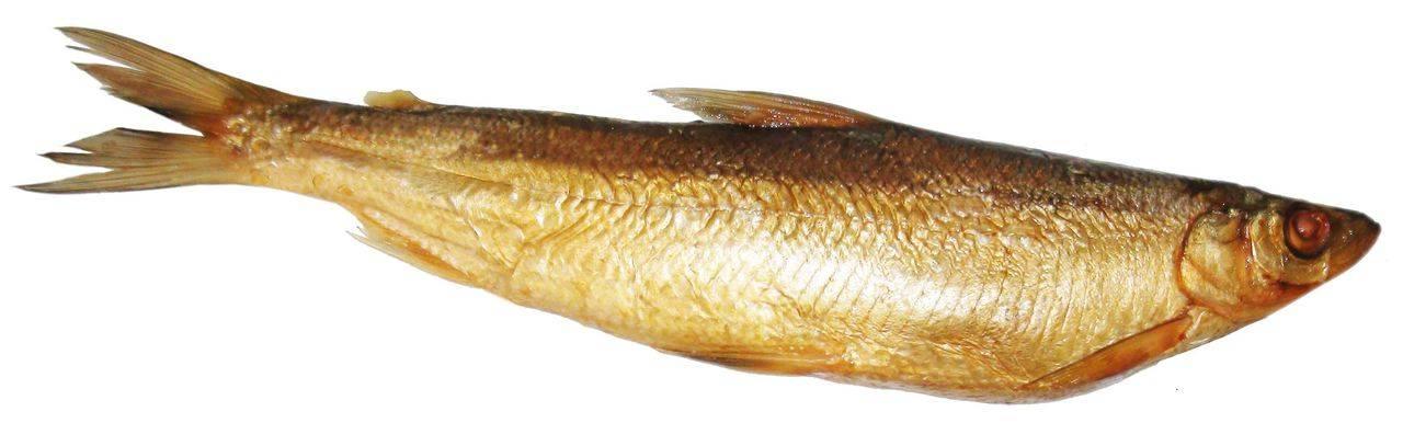 Ряпушка: польза, калорийность и где водится рыба. как готовить ряпушку в домашних условиях