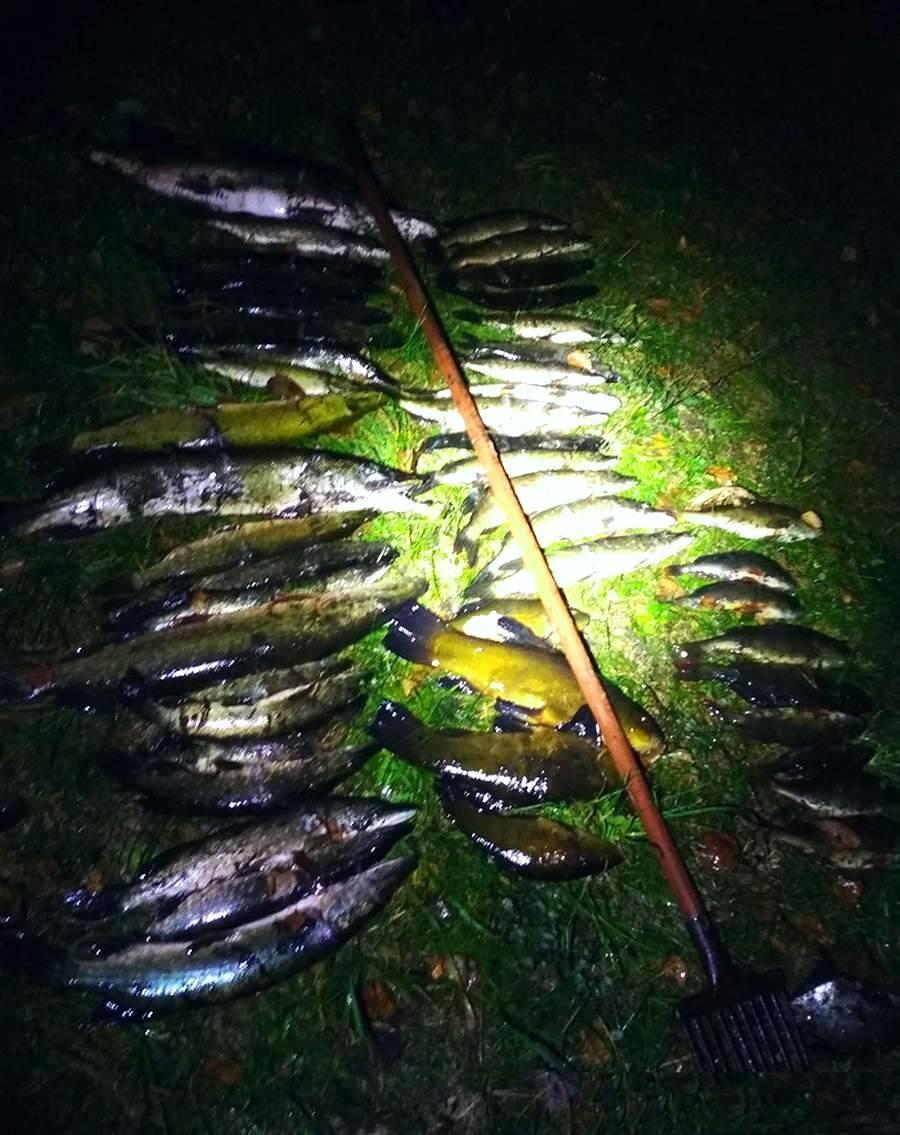 Рыбалка в витебской области очень популярна