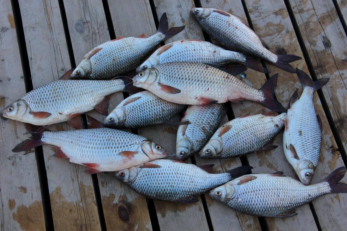 Рыбалка в дельте нижней волги: лучшие рыболовные базы эконом класса, как ловить сома