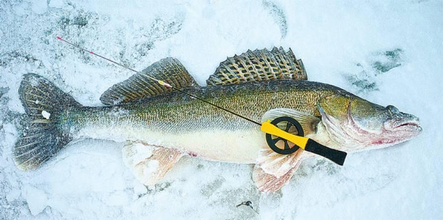 Рыбалка на судака и берша со льда - техника, приманки, снасти