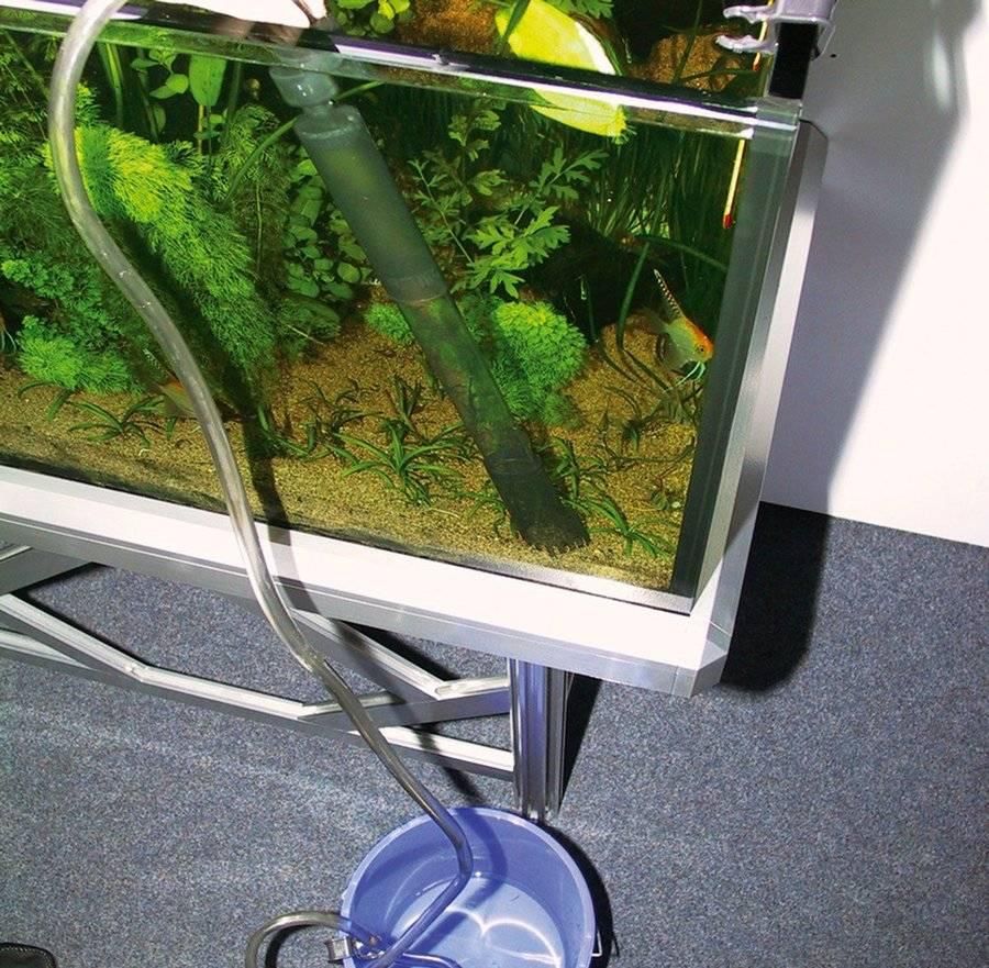 Как сифонить грунт в аквариуме (с растениями и без): как правильно и часто надо это делать, когда не нужно