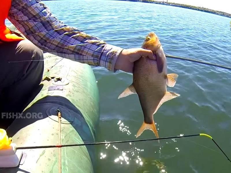 Оснастка зимней поплавочной удочки на леща и особенности рыбалки: как поймать летом, а также ловля с лодки, с берега, на течении и другие виды