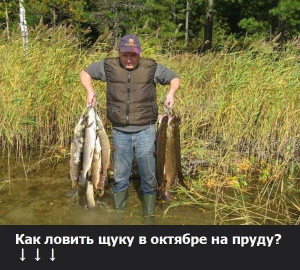 Ловля окуня на поплавочную удочку: на живца и на червя