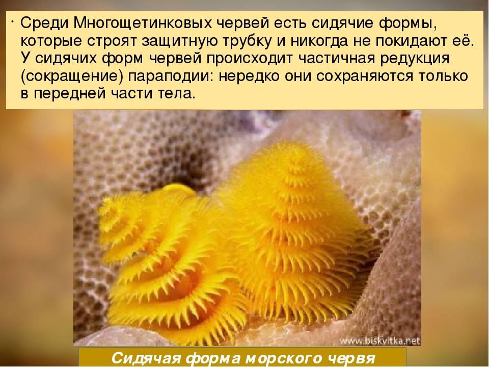 Глисты у аквариумных рыб симптомы