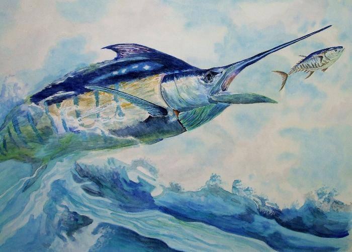 Голубой марлин: приспособления для скоростного плавания