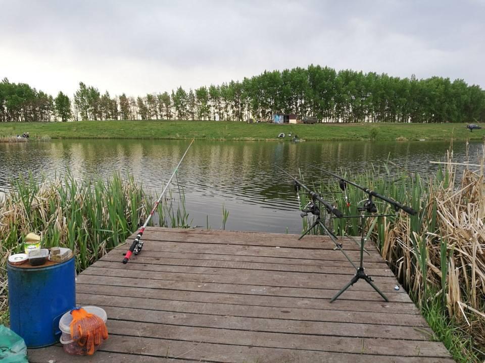За 10 лет только в одном регионе казахстана выросла популяция рыбы. почему истощаются рыбные запасы?