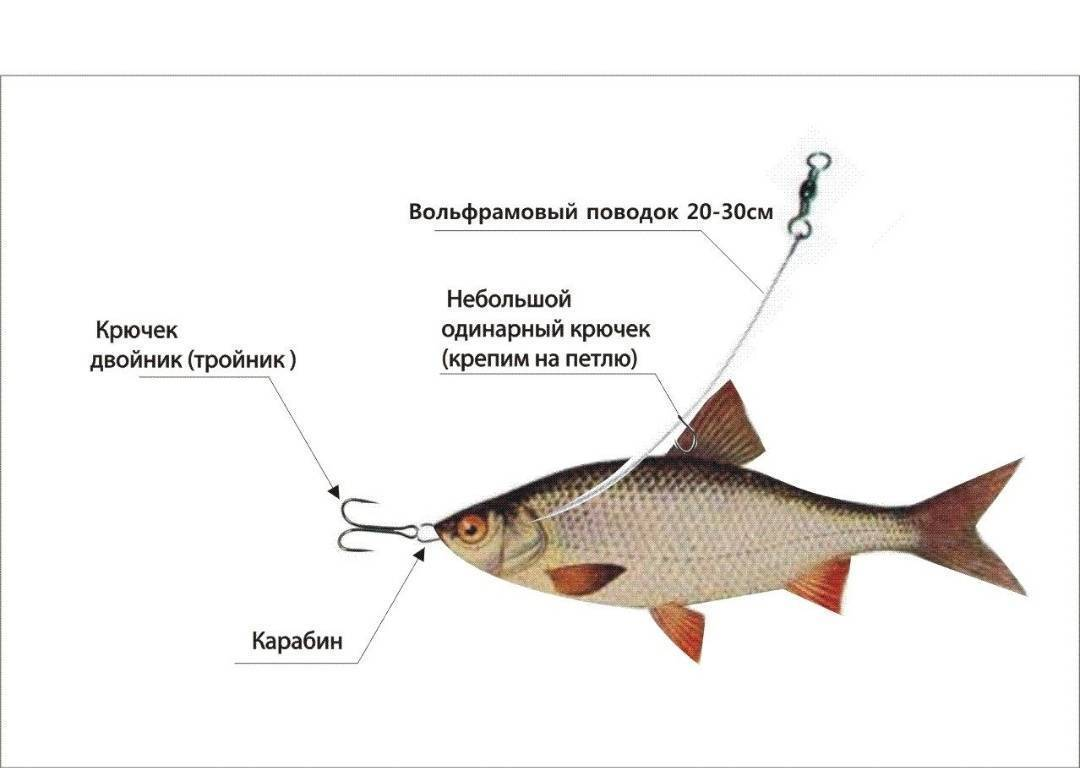 Ловля щуки на живца: эффективная рыбалка с берега и лодки, выбор снасти