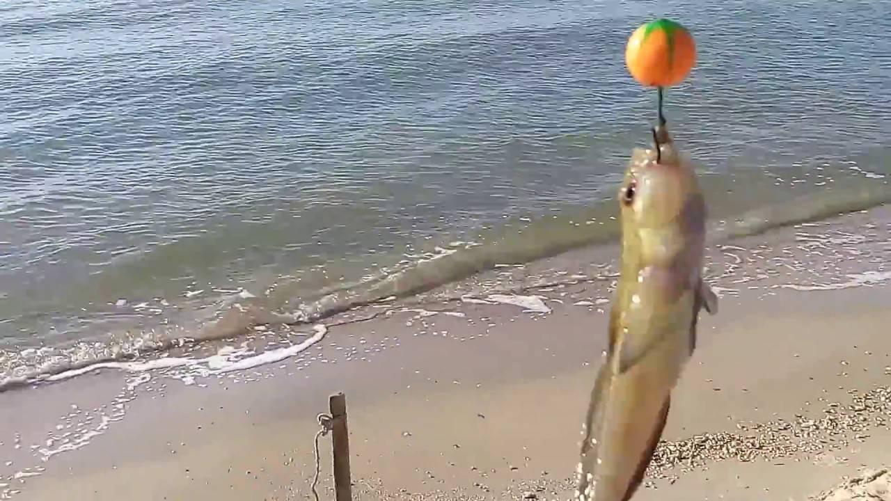 Как ловить и как поймать пеленгаса в азовском море