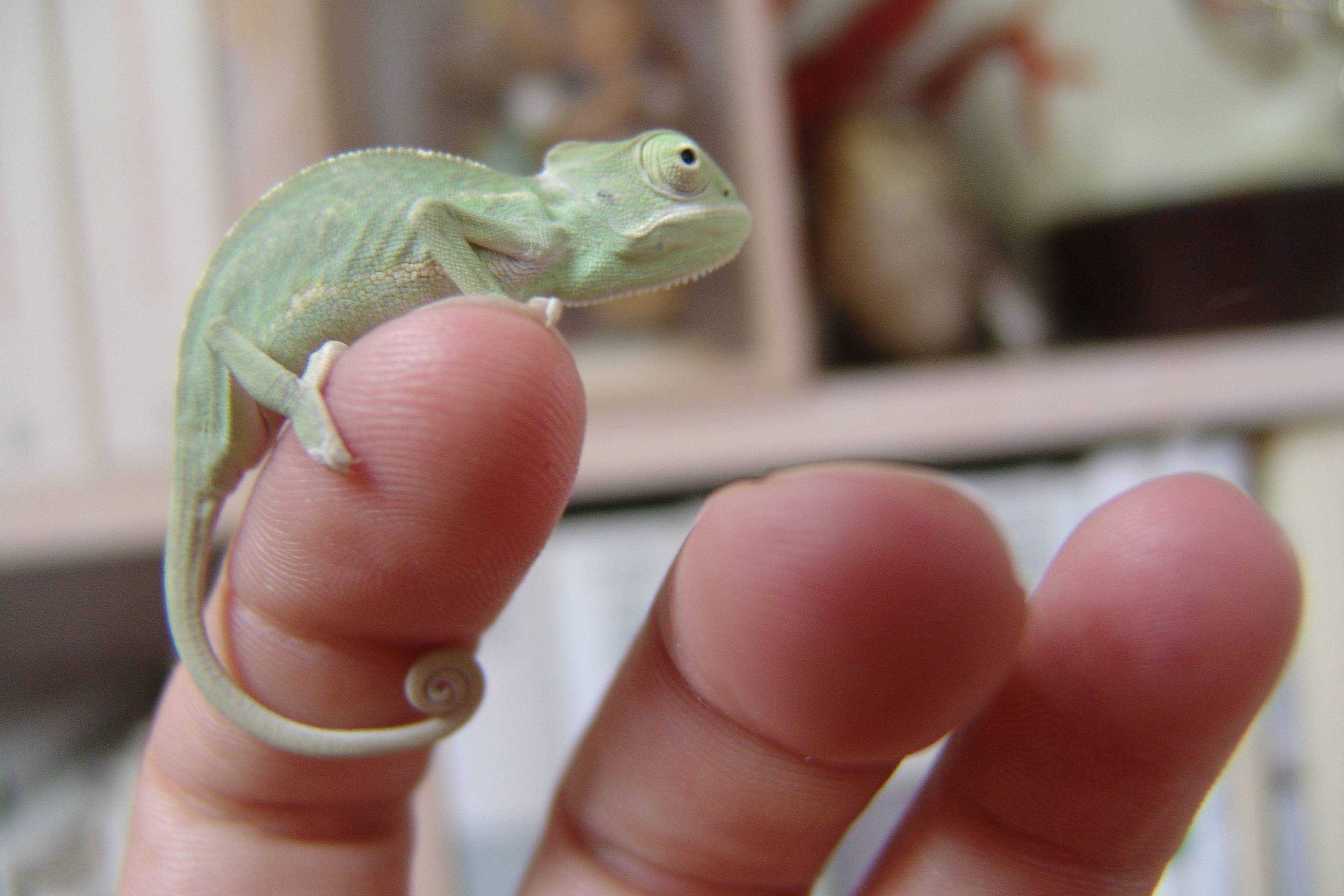 Нюансы содержания и кормления экзотических питомцев – все о ящерице прыткой