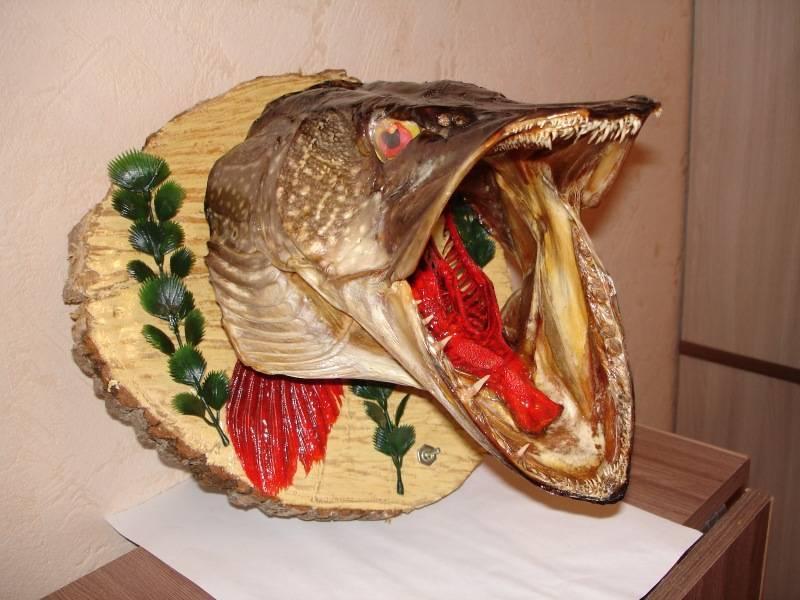 Инструкция по изготовлению чучела из головы щуки