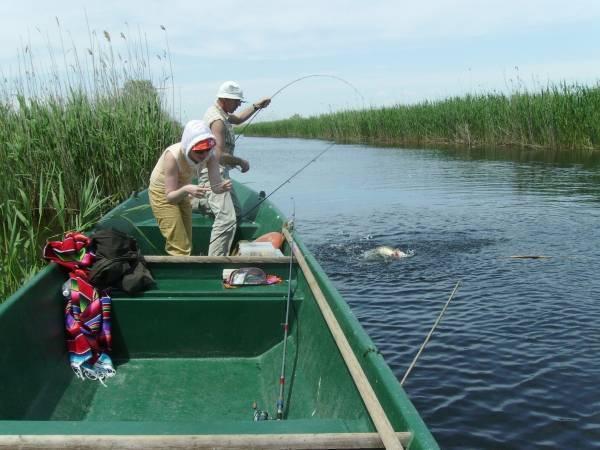 Рыбалка в астрахани и астраханской области 2020   базы отдыха, запрет, реки, дикарем, на волге