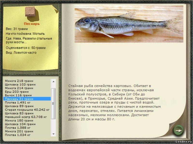 Тактические приемы на речной рыбалке зимой - читайте на сatcher.fish