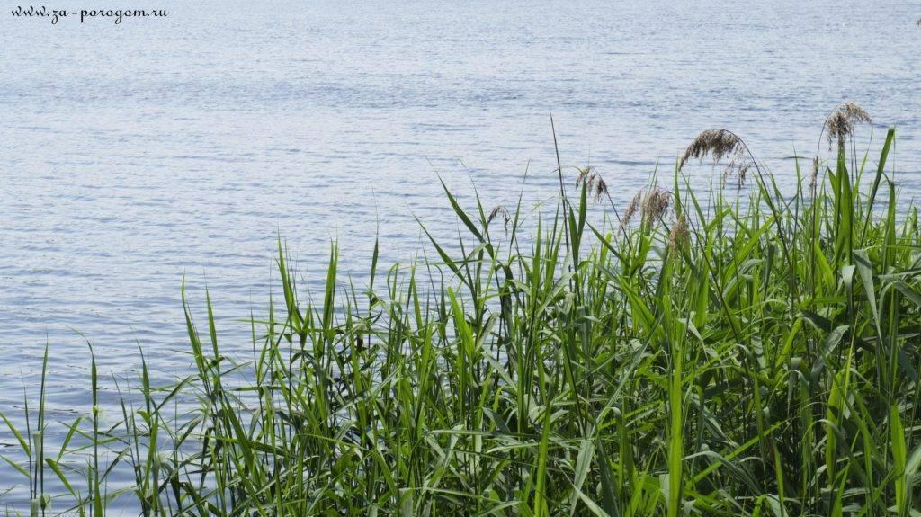 Озёра московской области для купания, отдыха и рыбалки