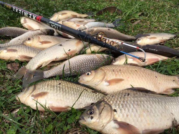 Ловля карася осенью: особенности рыбалки по холодной воде