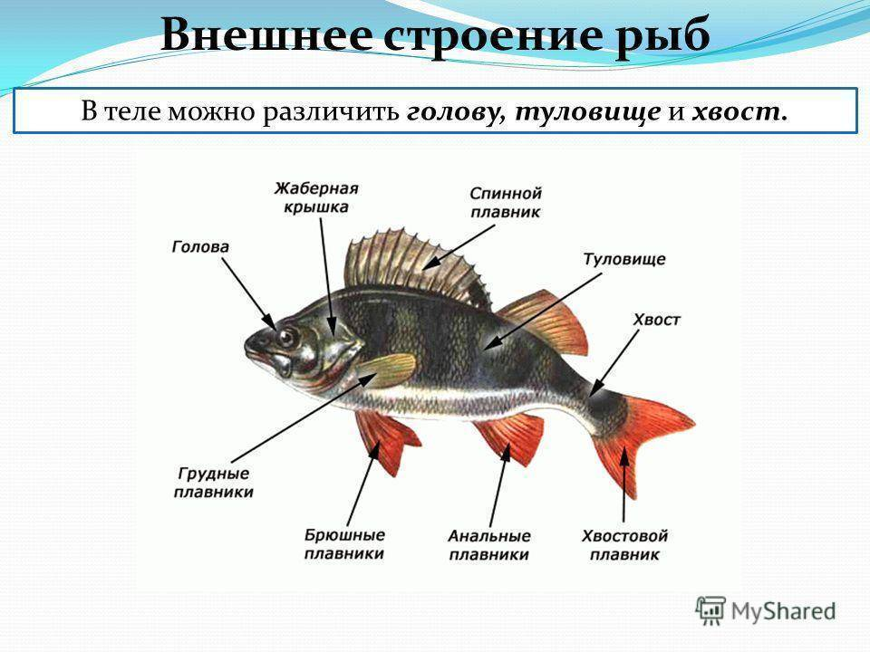 Чем питаются рыбы в зимнее время