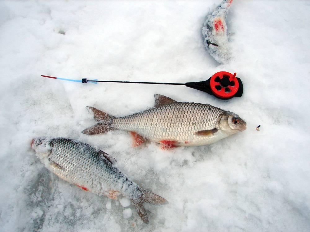 Как ловить на безмотылку зимой